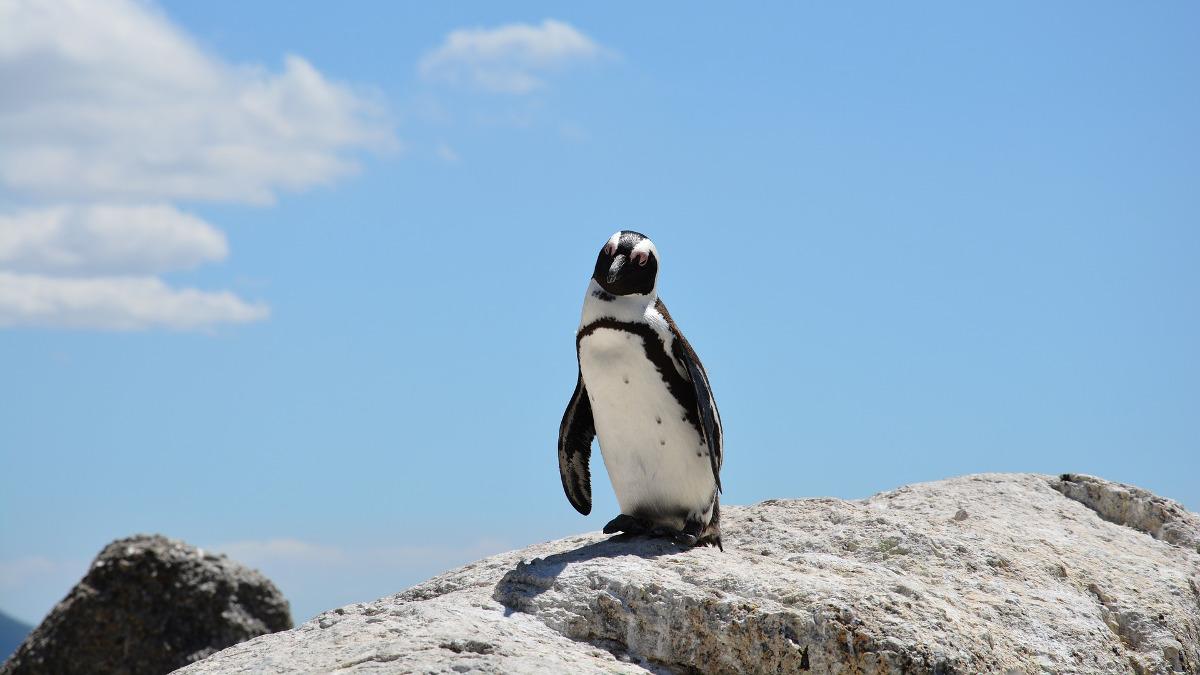 サムネイル:岩場のペンギン