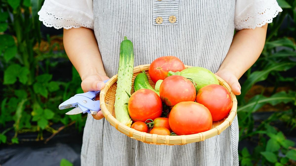 アイキャッチ:ざるに載せた野菜