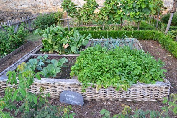 挿絵:家庭菜園