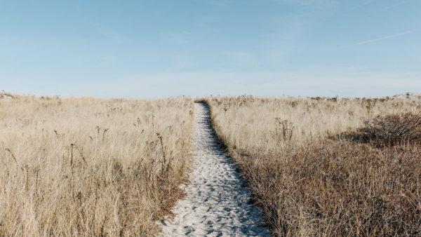 アイキャッチ:草原